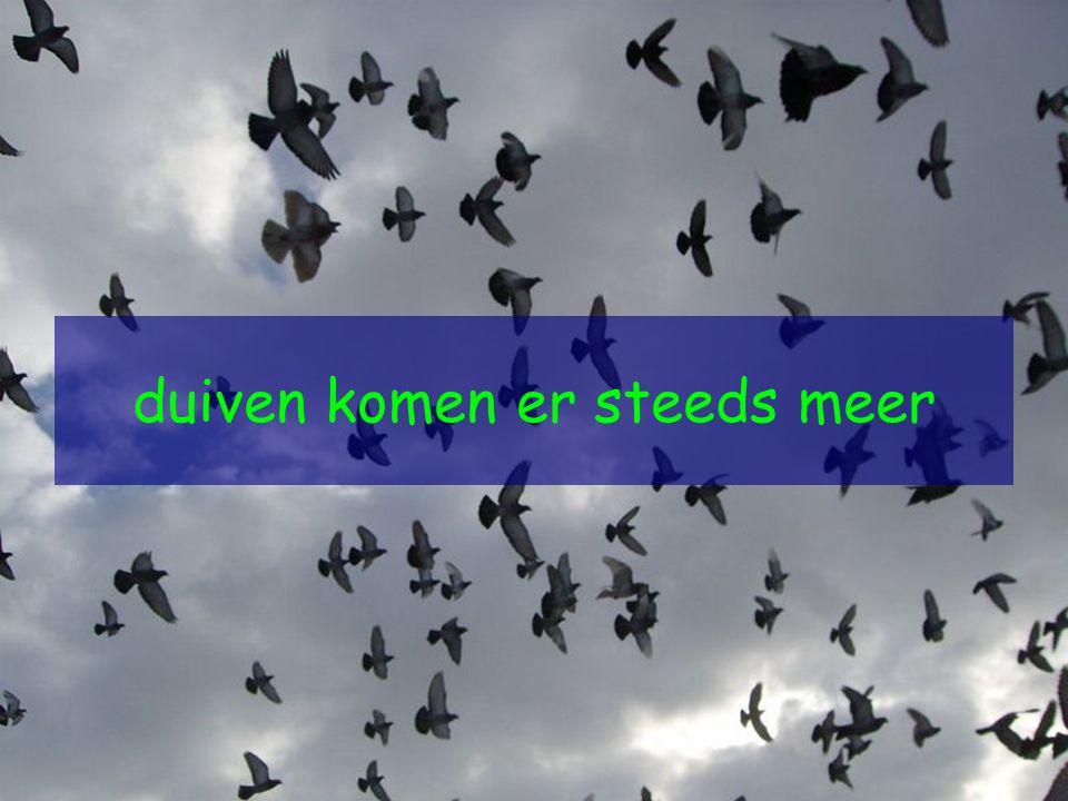 duiven komen er steeds meer