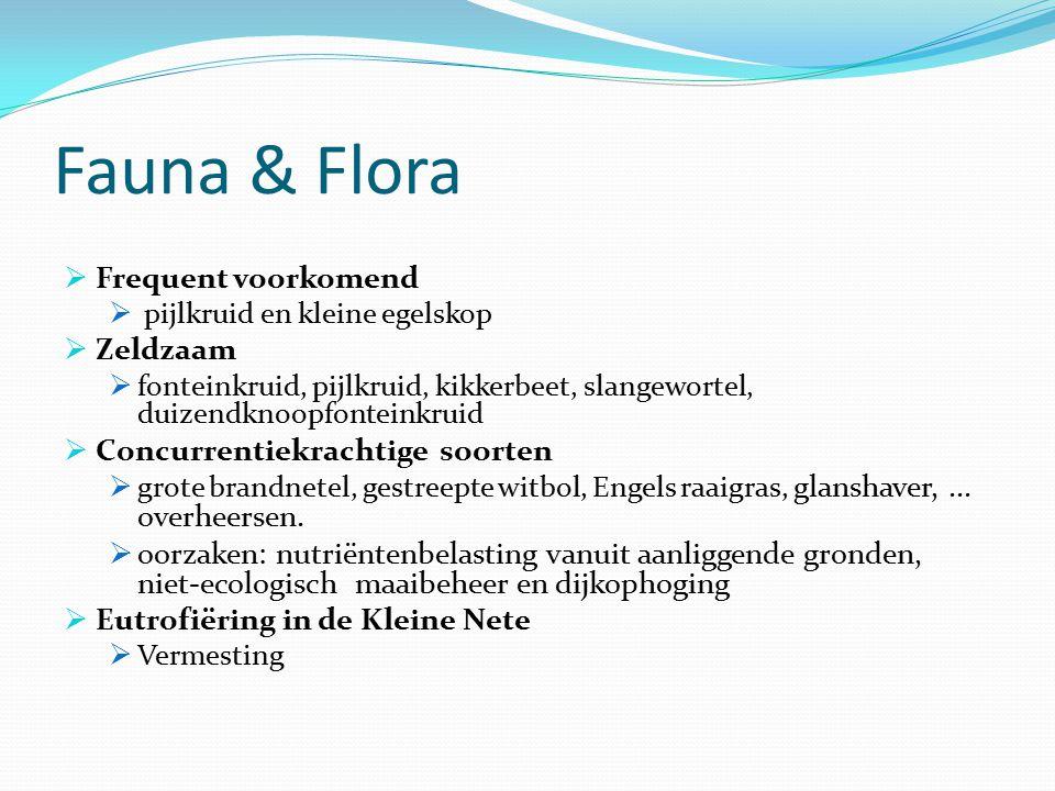 Fauna & Flora  Frequent voorkomend  pijlkruid en kleine egelskop  Zeldzaam  fonteinkruid, pijlkruid, kikkerbeet, slangewortel, duizendknoopfontein