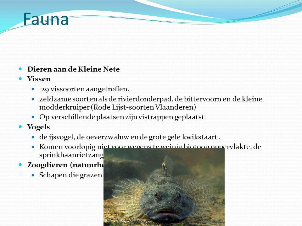 Fauna Dieren aan de Kleine Nete Vissen 29 vissoorten aangetroffen. zeldzame soorten als de rivierdonderpad, de bittervoorn en de kleine modderkruiper