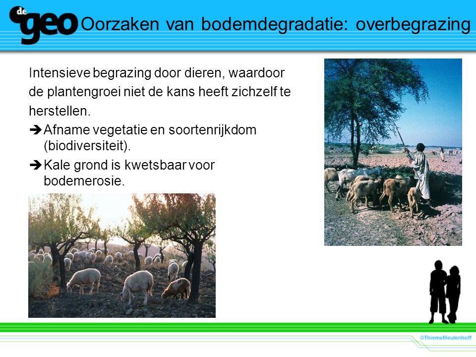 Oorzaken van bodemdegradatie: overbegrazing Intensieve begrazing door dieren, waardoor de plantengroei niet de kans heeft zichzelf te herstellen.  Af