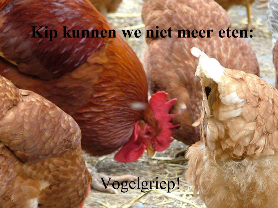 Kip kunnen we niet meer eten: Vogelgriep!