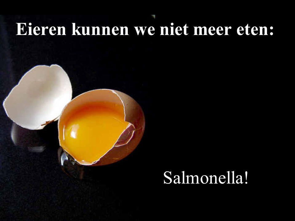 Salmonella! Eieren kunnen we niet meer eten: