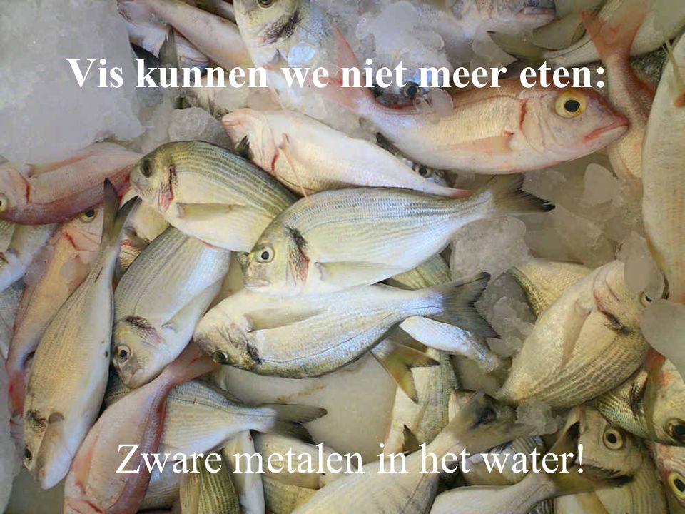 Vis kunnen we niet meer eten: Zware metalen in het water!