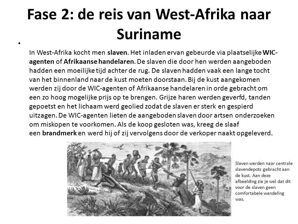 Fase 2: de reis van West-Afrika naar Suriname In West-Afrika kocht men slaven. Het inladen ervan gebeurde via plaatselijke WIC- agenten of Afrikaanse