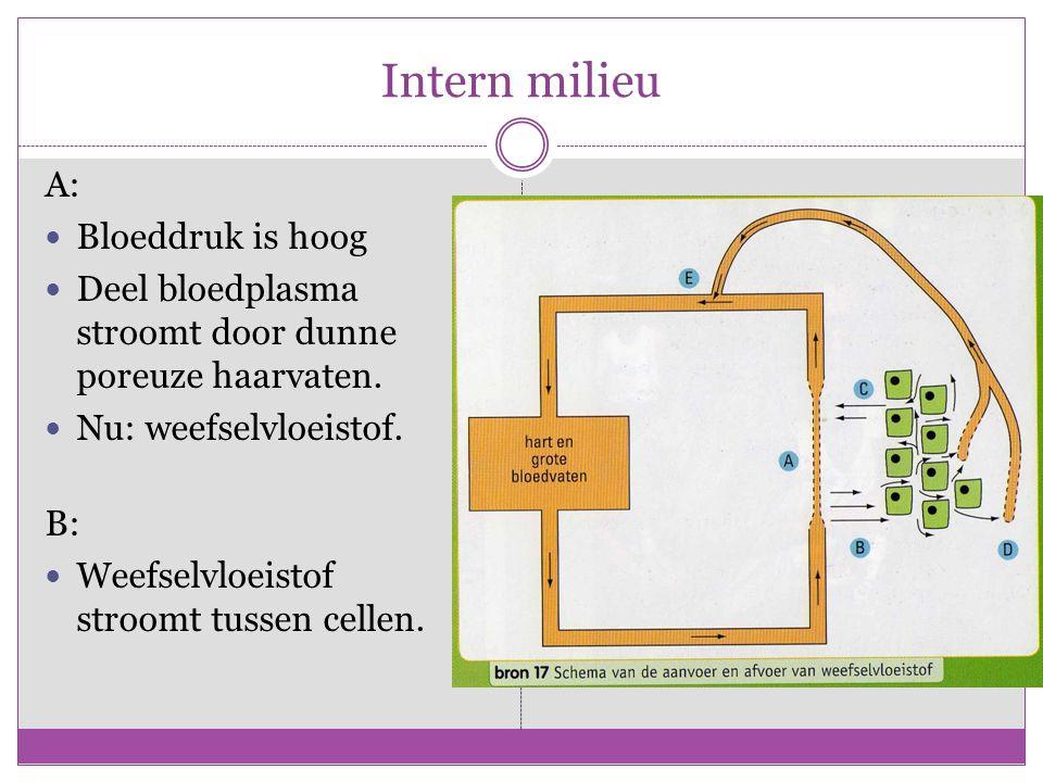 Intern milieu A: Bloeddruk is hoog Deel bloedplasma stroomt door dunne poreuze haarvaten.