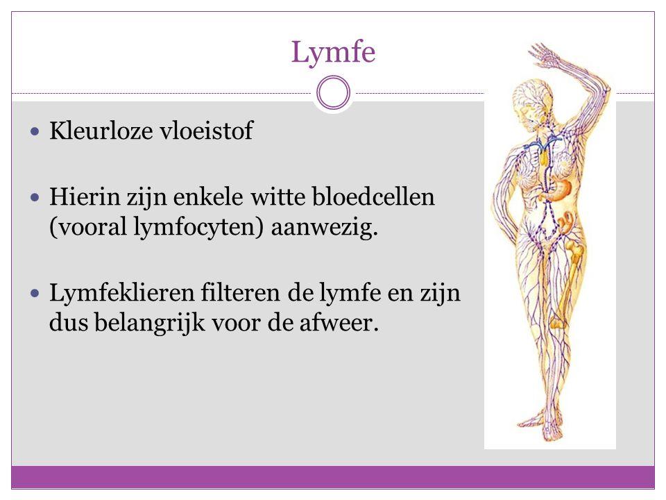 Lymfe Kleurloze vloeistof Hierin zijn enkele witte bloedcellen (vooral lymfocyten) aanwezig.