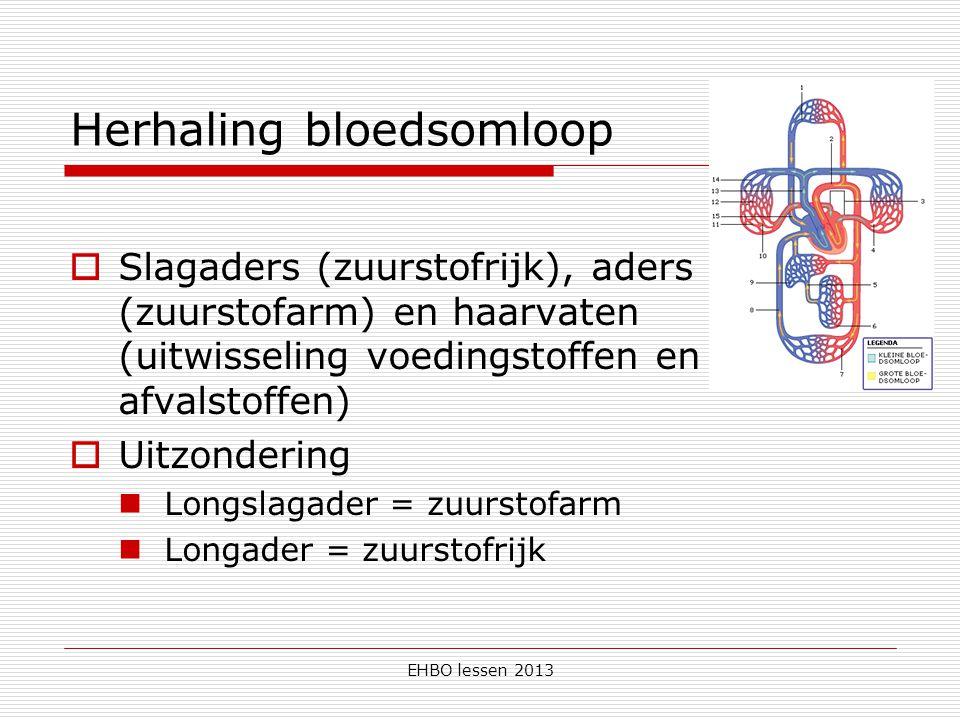 EHBO lessen 2013  5 liter bloed – stroomt binnen 1 minuut  Hart pompt het bloed Boezems / kamers trekken samen Tussen rechter en linkerhelft zit een tussenschot  Rode bloedcellen – vervoer van zuurstof  Witte bloedcellen – vernietigen van ziektekiemen  Bloedplaatsjes – stollen van het bloed (korstjes)  Grote (hart – longen – hart) én kleine bloedsomloop (hart – overige organen – hart) Bloed