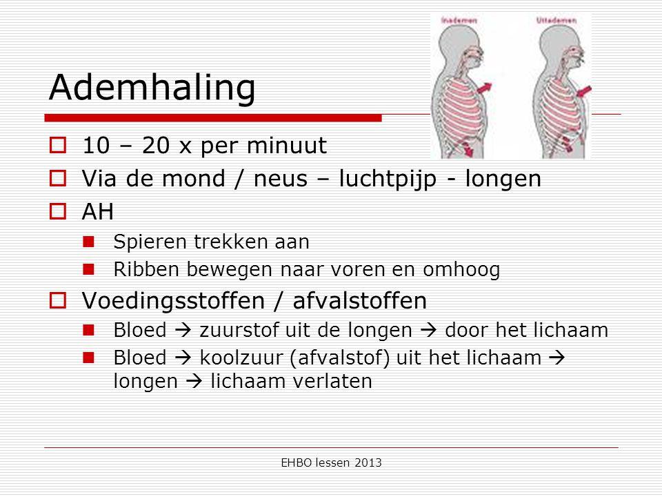 EHBO lessen 2013 Ademhaling  10 – 20 x per minuut  Via de mond / neus – luchtpijp - longen  AH Spieren trekken aan Ribben bewegen naar voren en omhoog  Voedingsstoffen / afvalstoffen Bloed  zuurstof uit de longen  door het lichaam Bloed  koolzuur (afvalstof) uit het lichaam  longen  lichaam verlaten