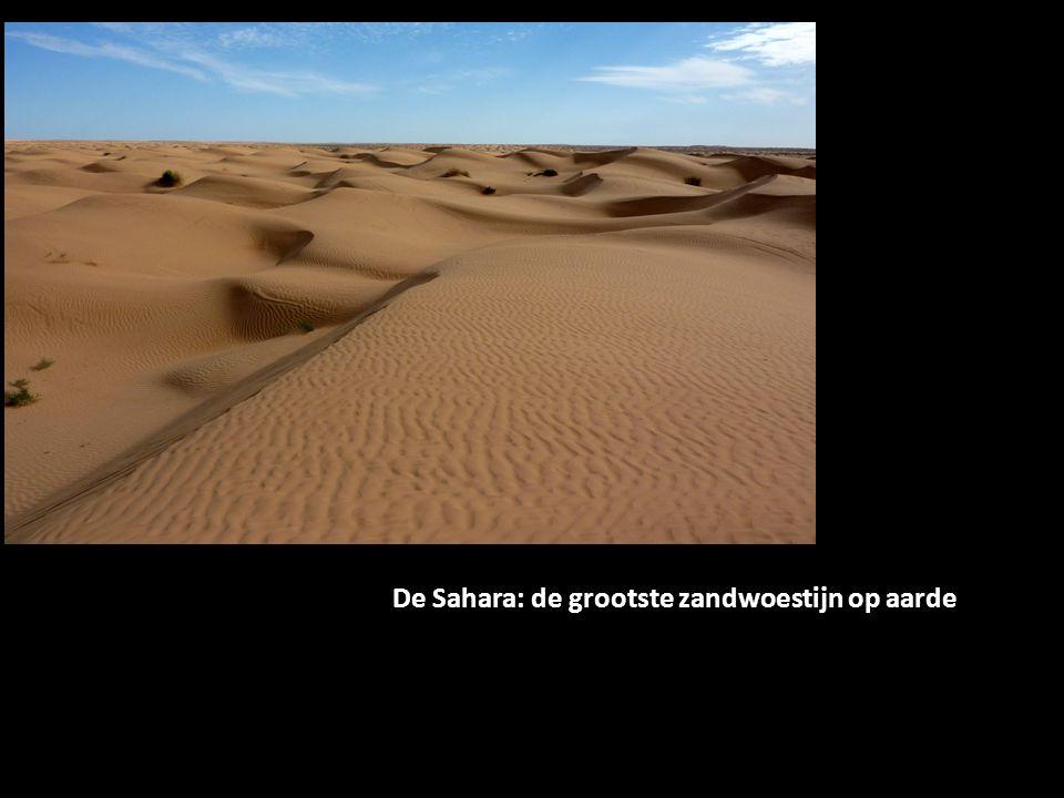 Overal waar het stroomt, is leven De Sahara: de grootste zandwoestijn op aarde