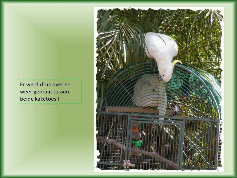 Op een goeie dag was er een Geelkuifkaketoe die lang bleef zitten bovenop de kooi die voorzien was van een speciaal slot, een parrot- proof slot
