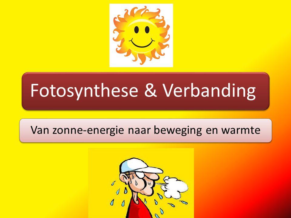 Fotosynthese Zon schijnt op plantPlant maakt met energie van de zon glucoseMolecuul glucose bevat energie (van de zon)Energie in glucose: chemische energie