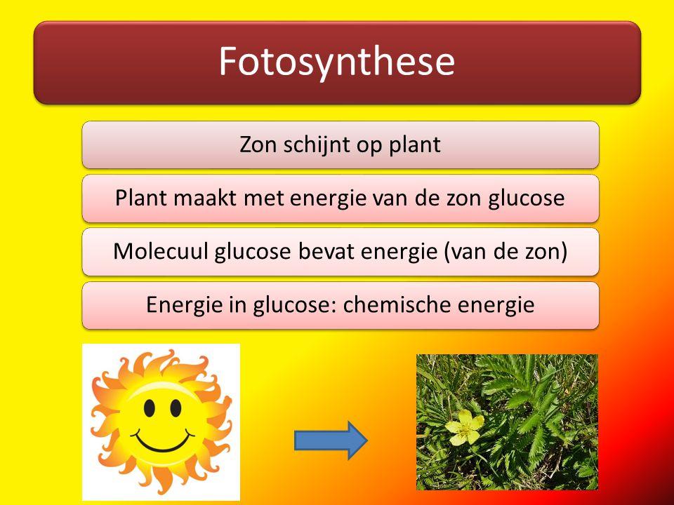 Fotosynthese Zon schijnt op plantPlant maakt met energie van de zon glucoseMolecuul glucose bevat energie (van de zon)Energie in glucose: chemische en