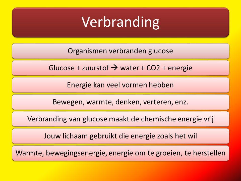Verbranding Organismen verbranden glucoseGlucose + zuurstof  water + CO2 + energieEnergie kan veel vormen hebbenBewegen, warmte, denken, verteren, en