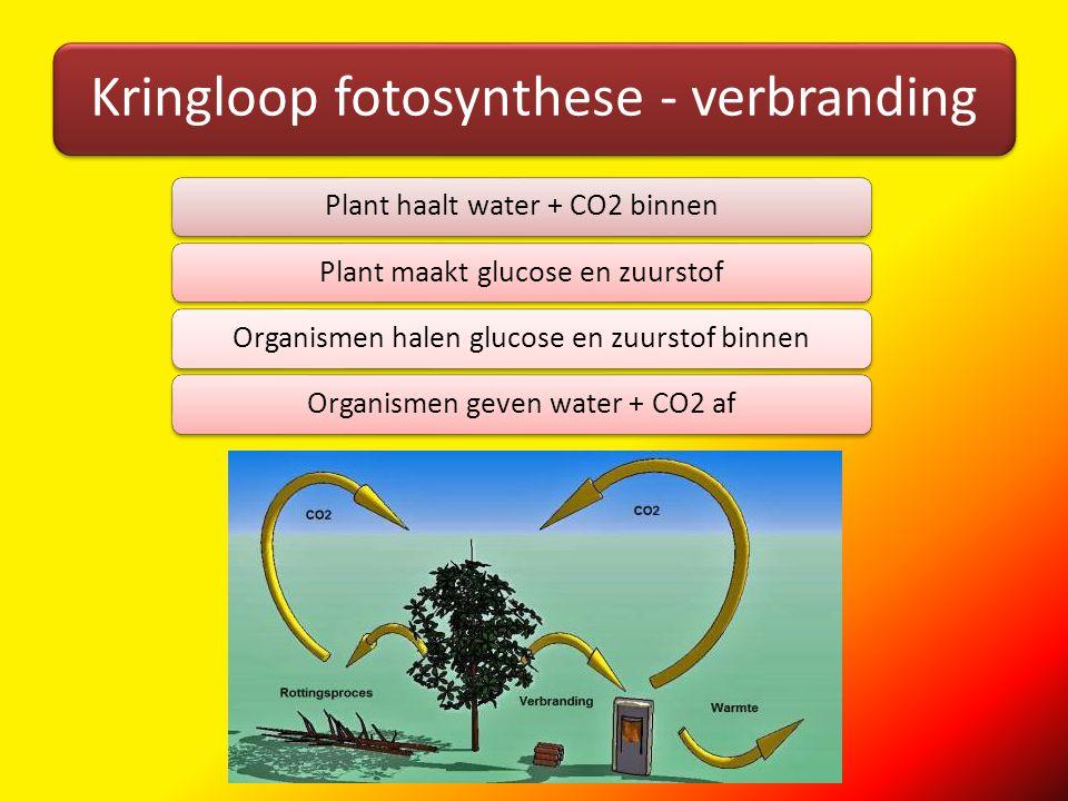 Kringloop fotosynthese - verbranding Plant haalt water + CO2 binnenPlant maakt glucose en zuurstofOrganismen halen glucose en zuurstof binnenOrganisme