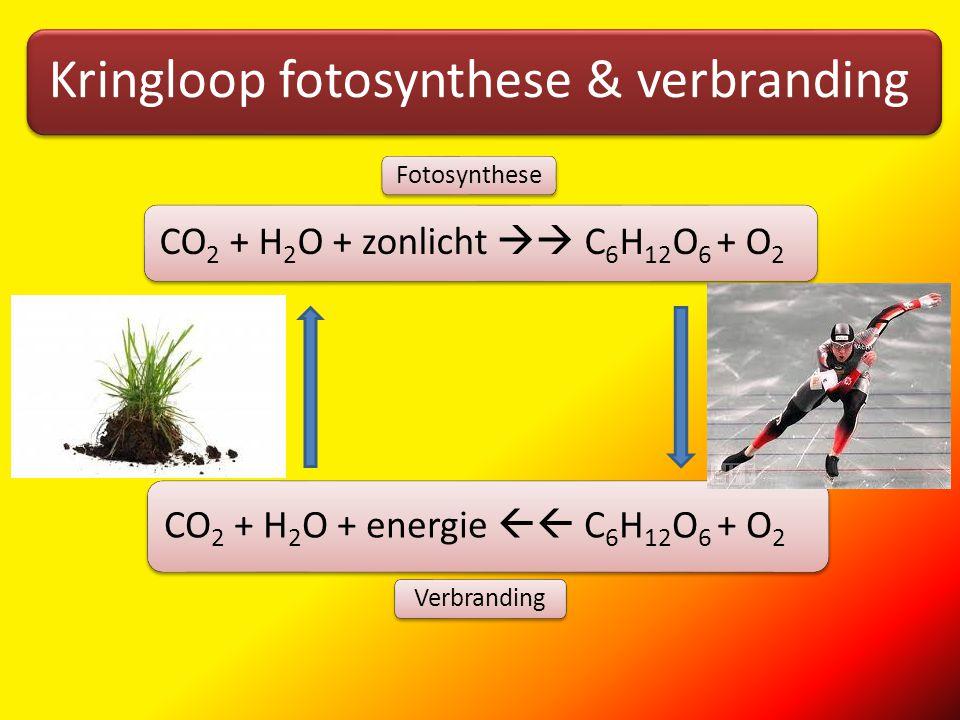 Alles draait om energie Bekijk site van de link op de onderdelen:Alles draait om energieDe fotosyntheseDe verbrandingAlles draait om groene planten