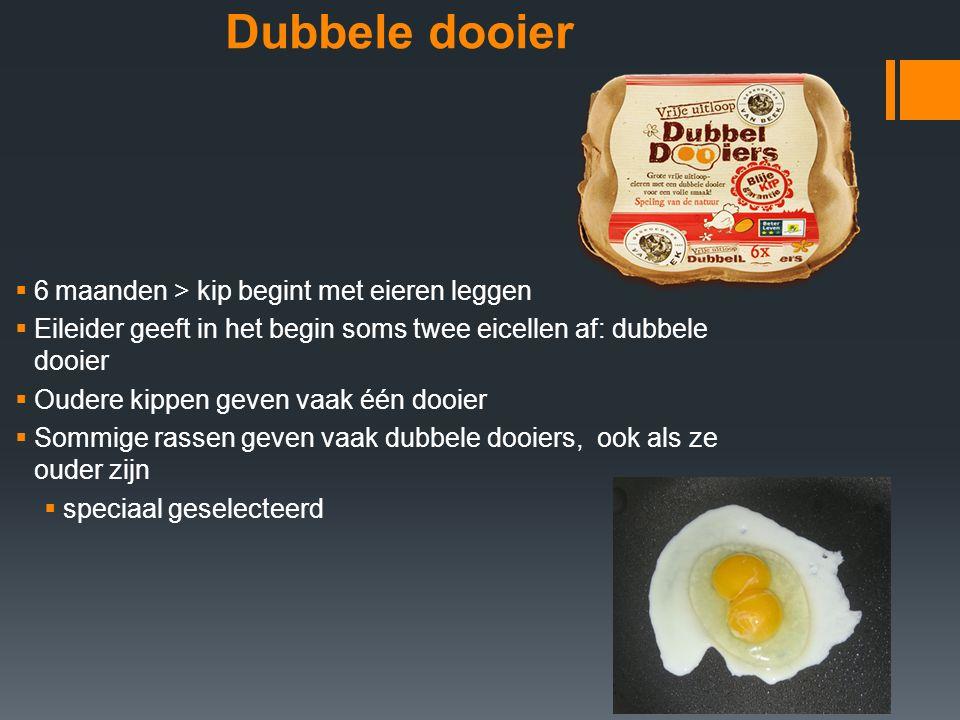 Dubbele dooier  6 maanden > kip begint met eieren leggen  Eileider geeft in het begin soms twee eicellen af: dubbele dooier  Oudere kippen geven va