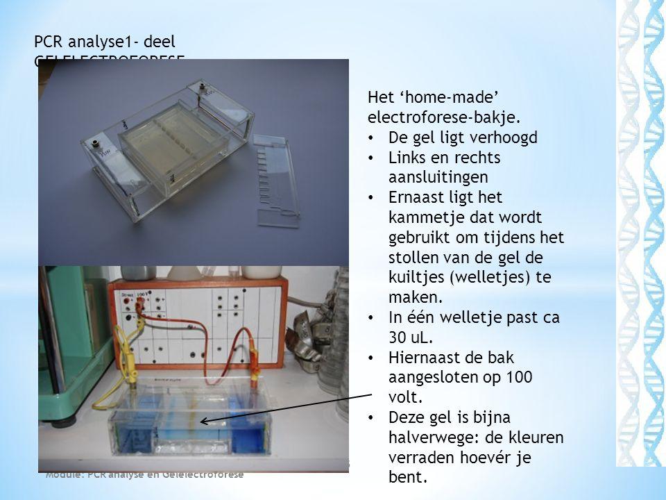 Module: PCR analyse en Gelelectroforese 15 PCR analyse1- deel GELELECTROFORESE Het 'home-made' electroforese-bakje.