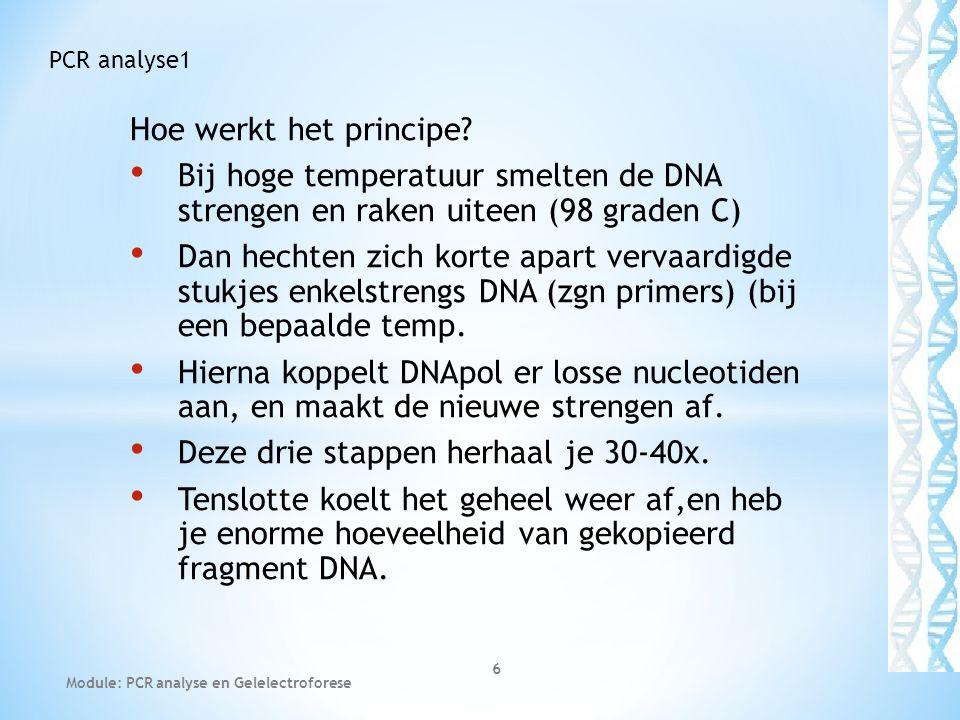 1a gewone dubbelstrengs DNA 1b DNA Smelt bij 98 graden 1c bij ca 50 graden hechten primers 1d bij 72 graden worden deze aangevuld met losse nucleotiden door enzym Taq-DNApolymerase (Taq -= Thermo aquatic) 2b Opnieuw smelt bij 98 graden Module: PCR analyse en Gelelectroforese 7 PCR analyse1