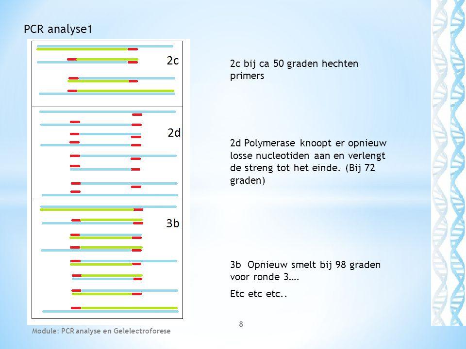 2c bij ca 50 graden hechten primers 2d Polymerase knoopt er opnieuw losse nucleotiden aan en verlengt de streng tot het einde. (Bij 72 graden) 3b Opni