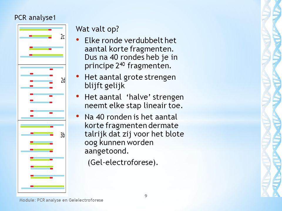 Module: PCR analyse en Gelelectroforese 20 PCR analyse1