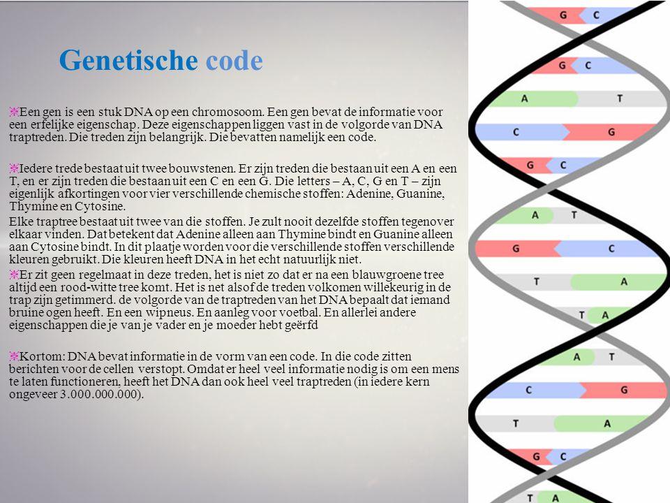 Genetische code ❈ Een gen is een stuk DNA op een chromosoom. Een gen bevat de informatie voor een erfelijke eigenschap. Deze eigenschappen liggen vast