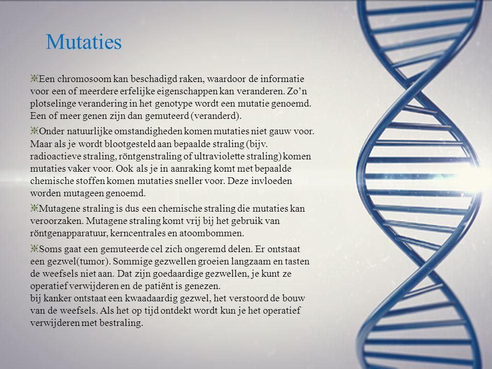 Mutaties ❈ Een chromosoom kan beschadigd raken, waardoor de informatie voor een of meerdere erfelijke eigenschappen kan veranderen. Zo'n plotselinge v