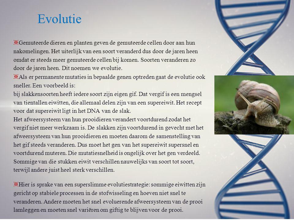 Evolutie ❈ Gemuteerde dieren en planten geven de gemuteerde cellen door aan hun nakomelingen. Het uiterlijk van een soort veranderd dus door de jaren