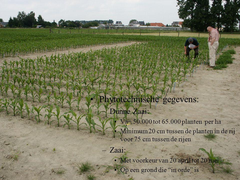 Phytotechnische gegevens: – Dunne Zaai: Van 50.000 tot 65.000 planten per ha Minimum 20 cm tussen de planten in de rij voor 75 cm tussen de rijen – Za