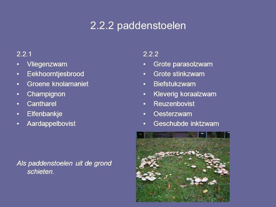 2.2.2 paddenstoelen 2.2.1 Vliegenzwam Eekhoorntjesbrood Groene knolamaniet Champignon Cantharel Elfenbankje Aardappelbovist Als paddenstoelen uit de g