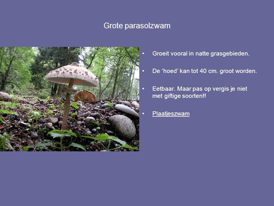 Grote parasolzwam Groeit vooral in natte grasgebieden. De 'hoed' kan tot 40 cm. groot worden. Eetbaar. Maar pas op vergis je niet met giftige soorten!
