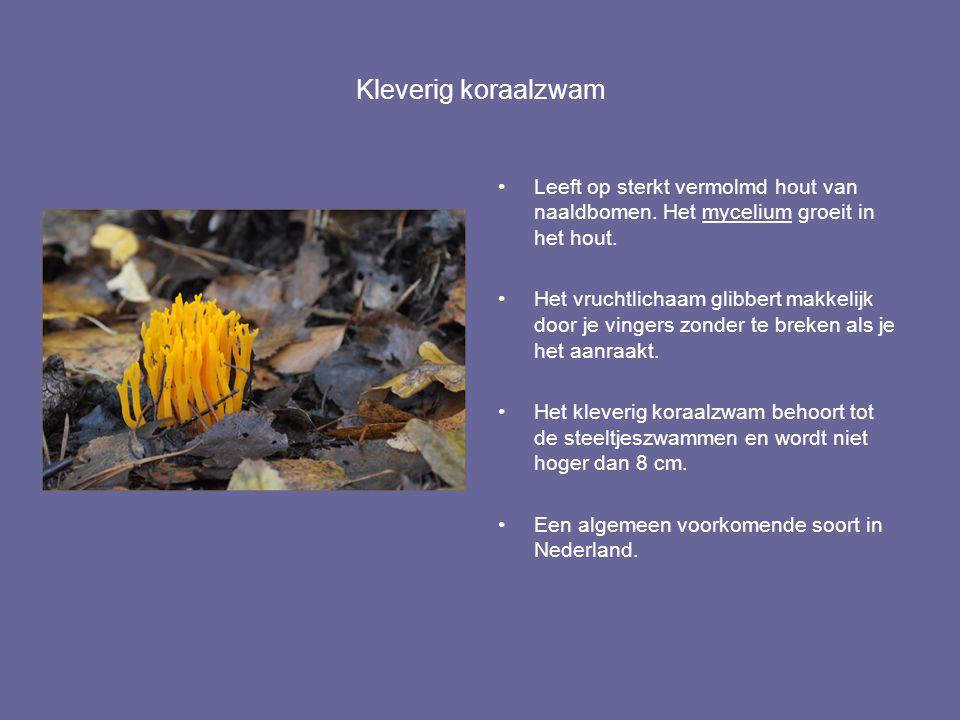 Kleverig koraalzwam Leeft op sterkt vermolmd hout van naaldbomen. Het mycelium groeit in het hout. Het vruchtlichaam glibbert makkelijk door je vinger