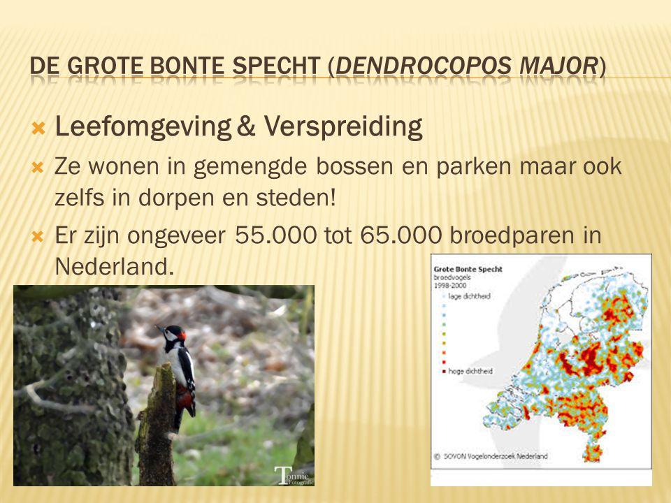  Leefomgeving & Verspreiding  Ze wonen in gemengde bossen en parken maar ook zelfs in dorpen en steden!  Er zijn ongeveer 55.000 tot 65.000 broedpa