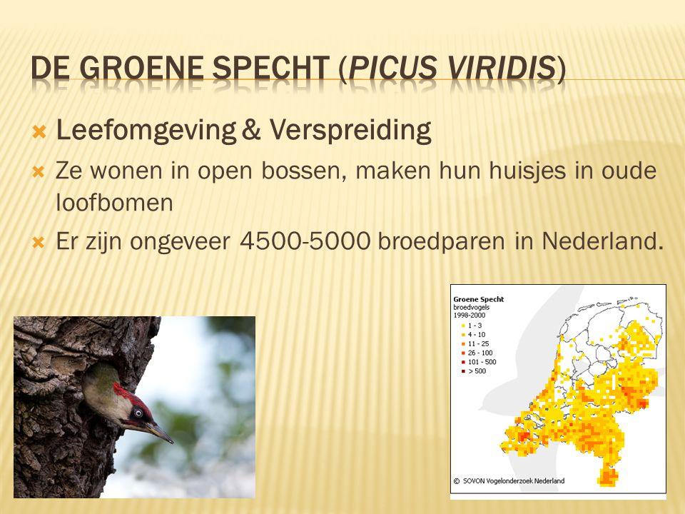  Leefomgeving & Verspreiding  Ze wonen in open bossen, maken hun huisjes in oude loofbomen  Er zijn ongeveer 4500-5000 broedparen in Nederland.