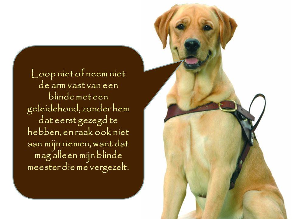 Loop niet of neem niet de arm vast van een blinde met een geleidehond, zonder hem dat eerst gezegd te hebben, en raak ook niet aan mijn riemen, want d