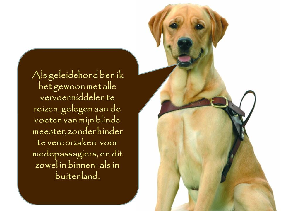 Als geleidehond ben ik het gewoon met alle vervoermiddelen te reizen, gelegen aan de voeten van mijn blinde meester, zonder hinder te veroorzaken voor