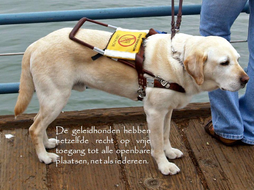 De geleidhonden hebben hetzelfde recht op vrije toegang tot alle openbare plaatsen, net als iedereen.