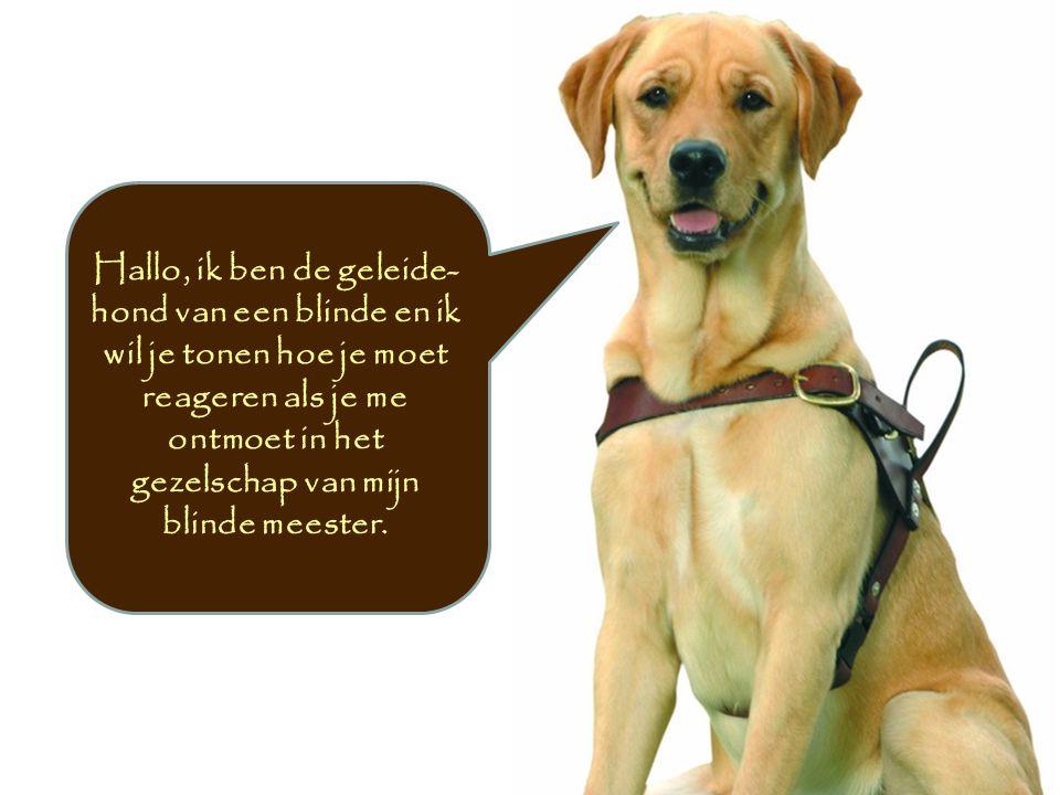 Hallo, ik ben de geleide- hond van een blinde en ik wil je tonen hoe je moet reageren als je me ontmoet in het gezelschap van mijn blinde meester.