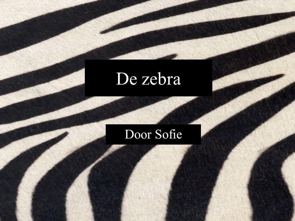 De zebra Door Sofie