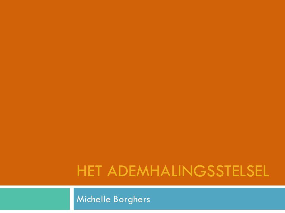 HET ADEMHALINGSSTELSEL Michelle Borghers
