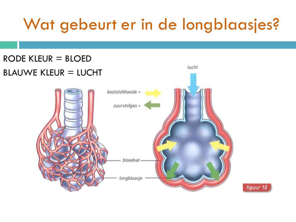 Wat gebeurt er in de longblaasjes.Het bloed geeft koolstofdioxide aan het longblaasje.