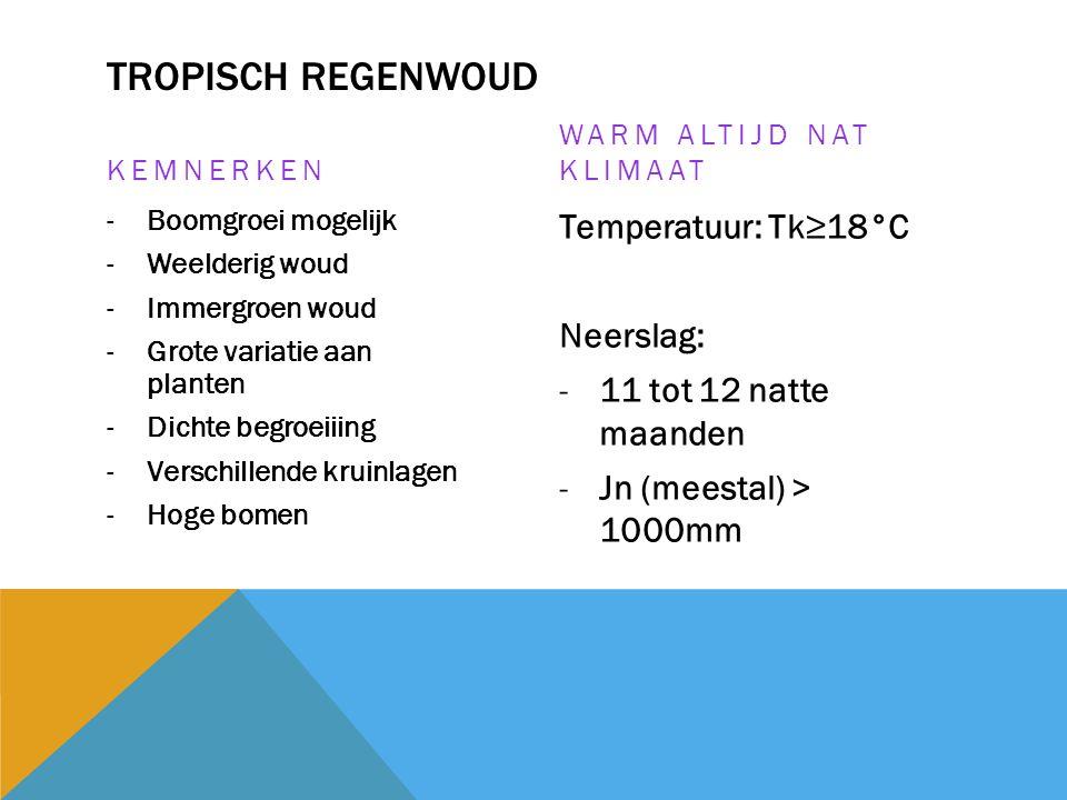 TROPISCH REGENWOUD KEMNERKEN -Boomgroei mogelijk -Weelderig woud -Immergroen woud -Grote variatie aan planten -Dichte begroeiiing -Verschillende kruin