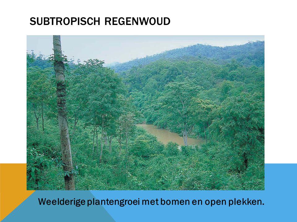SUBTROPISCH REGENWOUD Weelderige plantengroei met bomen en open plekken.