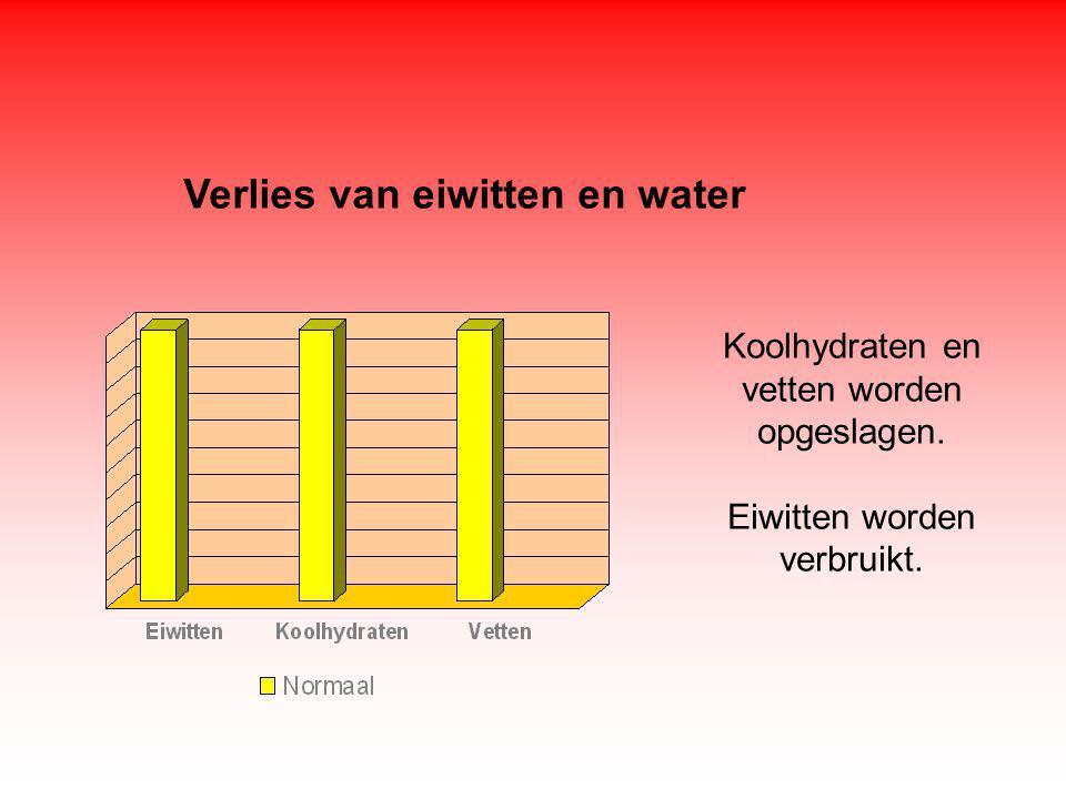 Verlies van eiwitten en water Koolhydraten en vetten worden opgeslagen. Eiwitten worden verbruikt.