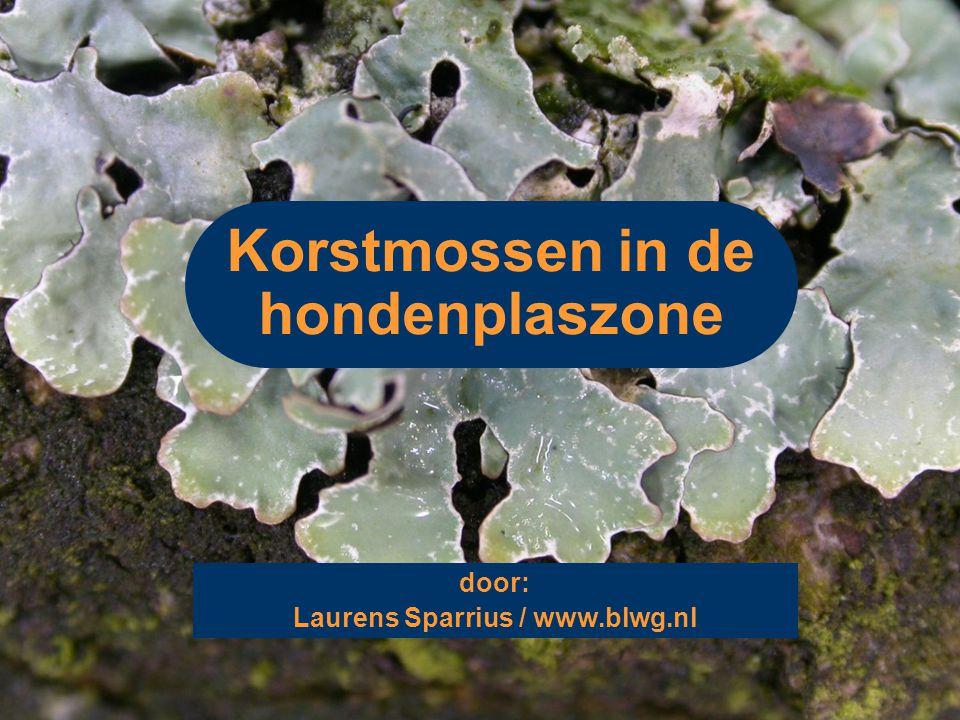 Korstmossen in de hondenplaszone door: Laurens Sparrius / www.blwg.nl