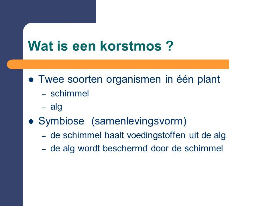 Wat is een korstmos ? Twee soorten organismen in één plant – schimmel – alg Symbiose (samenlevingsvorm) – de schimmel haalt voedingstoffen uit de alg
