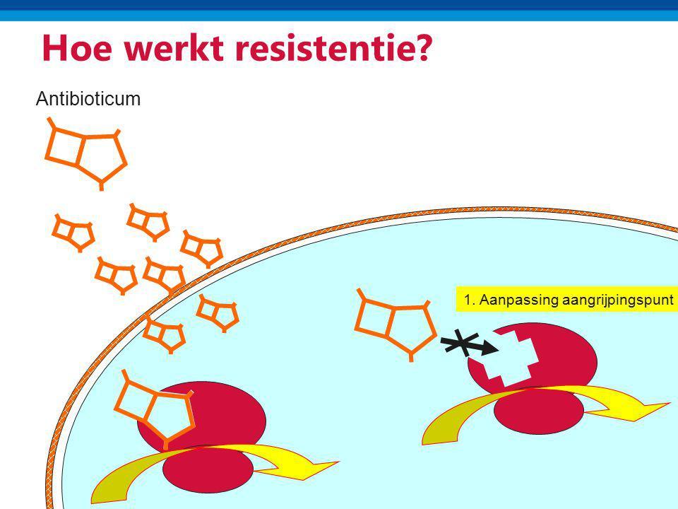 Hoe werkt resistentie? Antibioticum 1. Aanpassing aangrijpingspunt