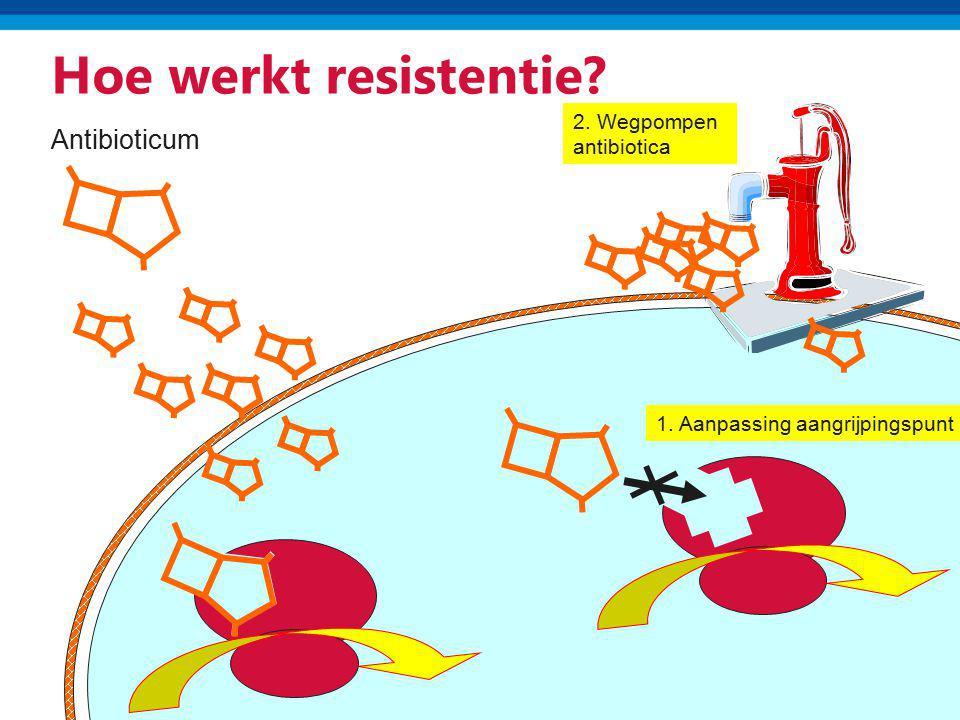 Hoe werkt resistentie? Antibioticum 1. Aanpassing aangrijpingspunt 2. Wegpompen antibiotica