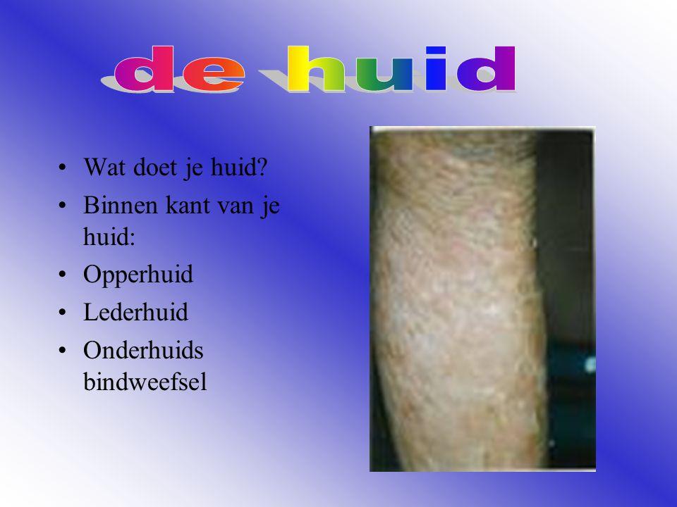 Wat doet je huid? Binnen kant van je huid: Opperhuid Lederhuid Onderhuids bindweefsel