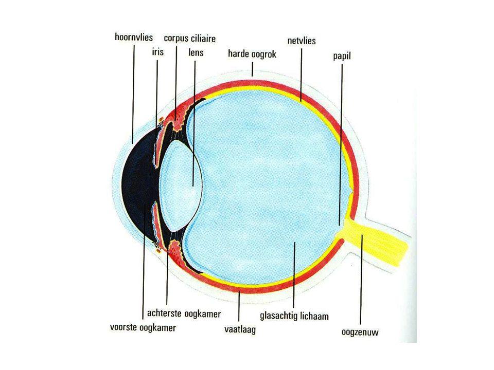 Dit is een phoropter. Zo kijken ze in je oog.