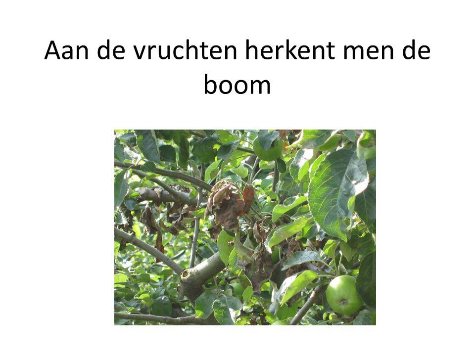 Aan de vruchten herkent men de boom